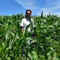 6th of July Corn 2018 · Weatherbury Farm