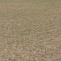 Appalachian Hard White Winter Wheat • Appalachian Bread Flour
