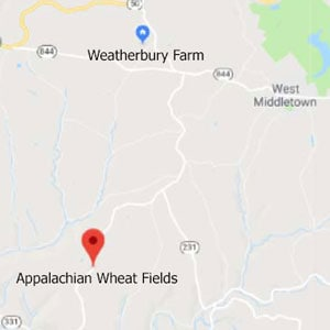 Appalachian Wheat Fields 2019 • Appalachian Bread Flour • Weatherbury Grain Tracker
