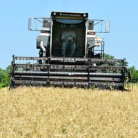 Harvesting Appalachian Wheat 7.10.20 • Weatherbury Farm Grain Tracker 2020