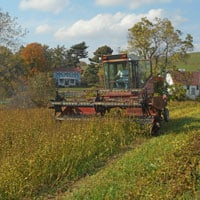 Swathing Buckwheat • Weatherbury Buckwheat Grain Tracker