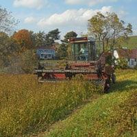 Swathing Buckwheat • Weatherbury Buckwheat Grain Tracker