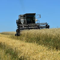 Combine Harvesting Danko Rye 7.18.20 • Weatherbury Farm 2020 Grain Tracker