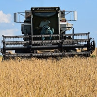 Combining (harvesting) Grains