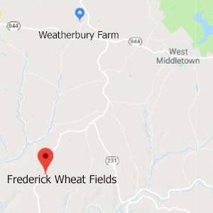 Frederic Wheat Fields 2020 • Pastry Flour in the Field • Weatherbury Farm Grain Tracker