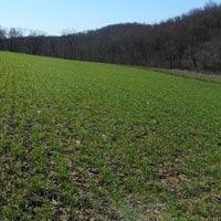 Frederick Wheat 4.3.20 • Weatherbury Farm 2020 Grain Tracker