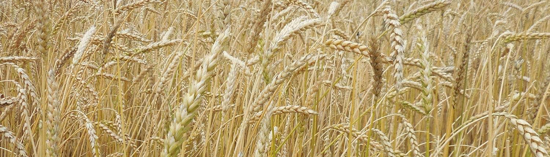 Frederick Wheat · grain tracker slider · Weatherbury Farm