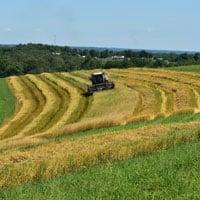 Frederick Wheat Harvesting 7.15.20 • Weatherbury Farm 2020 Grain Tracker