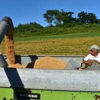 Frederick Wheat Unloading harvested grain into a gravity box 7.15.20 • Weatherbury Farm 2020 Grain Tracker
