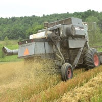ehl Oats Straw from Harvest 7.18.20 • Weatherbury Farm 2020 Grain Tracker
