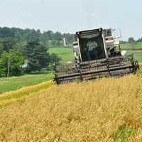 Gehl Oats Harvesting 7.19.21 • Weatherbury Farm Grain Tracker 2021