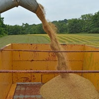 Gehl Oats Unloading into Wagon • 7.30.20 • Weatherbury Farm 2020 Grain Tracker