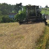 Combining Glenn Wheat 7.15.21 • Weatherbury Farm Grain Tracker 2021