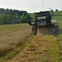 Glenn Wheat Harvest Straw 7.15.21 • Weatherbury Farm Grain Tracker 2021