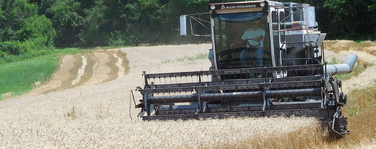 Harvesting Appalachian White Wheat · Weatherbury Farm