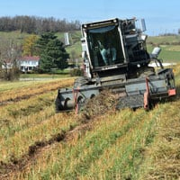 Harvesting Buckwheat 2019 • Weatherbury Farm Grain Tracker