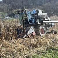 Harvesting Wapsie Valley Corn 11.16.19 • Weatherbury Farm