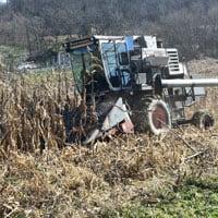 Harvesting Wapsie Valley Corn 11.16.19 • Weatherbury Farm