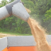 Loading grains into wagons for storage