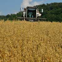 Harvesting Oats 2019 • Rolled Oats in the Field
