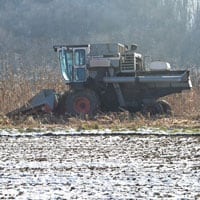 Harvesting Wapsie Valley Corn 2018 · Weatherbury Farm