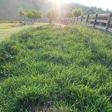 In development Alpine Einkorn plot · Grains Grown · Weatherbury Farm