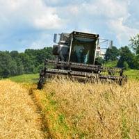 Harvesting Maxine Wheat • Weatherbury Farm
