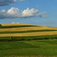 Amber Fields of Maxine Wheat • Weatherbury Farm Grain Tracker