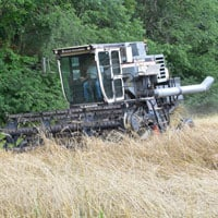 Maxine-Harvest-7.11.22 • Weatherbury Farm Grain Tracker 2021