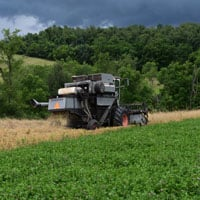 Maxine Harvest Storm Clouds • Weatherbury Farm Grain Tracker 2021