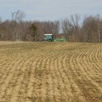 Maxine Wheat after Winter • Weatherbury Farm Grain Tracker 2021