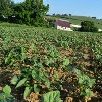 Merlot 7.9.20 • Weatherbury Farm 2020 Grain Tracker