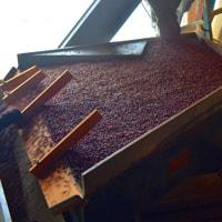 Merlot Beans on Gravity Table • Weatherbury Farm 2020 Grain Tracker