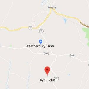 Rye Fields 2019 • Organic Rye Flour • Weatherbury Grain Tracker