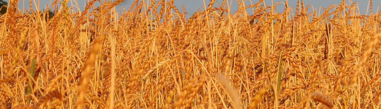 Spelt · grain tracker slider · Weatherbury Farm