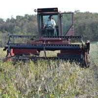 Swathing Black Beans 10.19.19 • Weatherbury Farm Grain Tracker