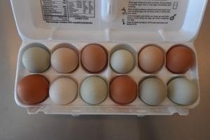 Tasty Healthy Organic Eggs from Weatherbury Farm