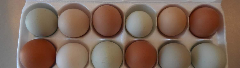 Tasty Healthy Organic Eggs · Weatherbury Farm