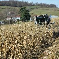Harvesting Wapsie Valley Corn 11.20.20 • Weatherbury Farm 2020 Grain Tracker