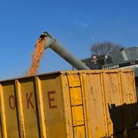 Unloading Wapsie Valley Corn into Wagon 11.20.20 • Weatherbury 2020 Grain Tracker