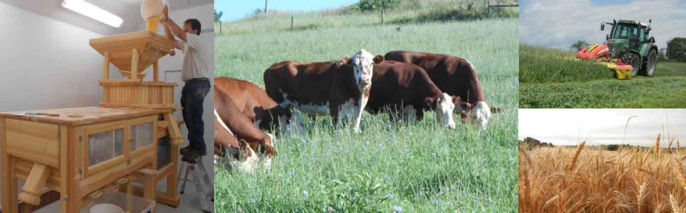 About Weatherbury Farm · Organic Flours, Grass Fed Beef